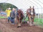 Draft Horse Lessons