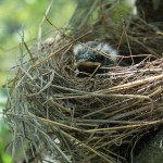How I Rescued a Baby Bird