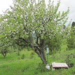 Shower Under the Apple Tree